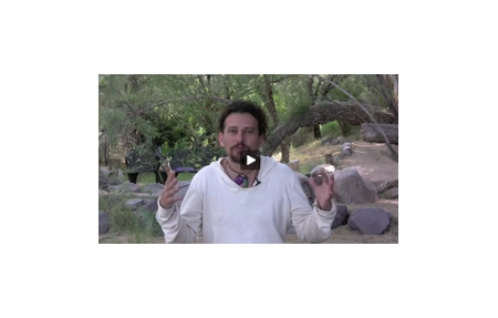 Click here to watch David Wolfe's Immunity Video